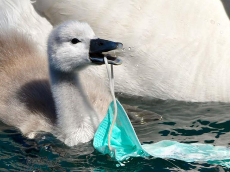 Ambiente, la lotta al Covid frena quella alla plastica